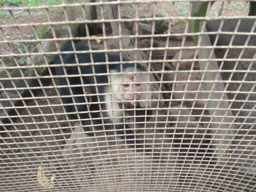 Mono enjaulado en zoológico. Imagen de Lucia Vita Sastre.